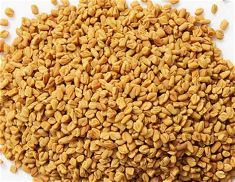 fenugreek breast picture 2