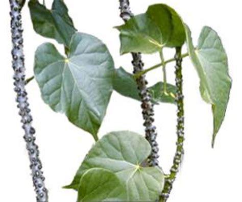 panyawan herbal medicine picture 1