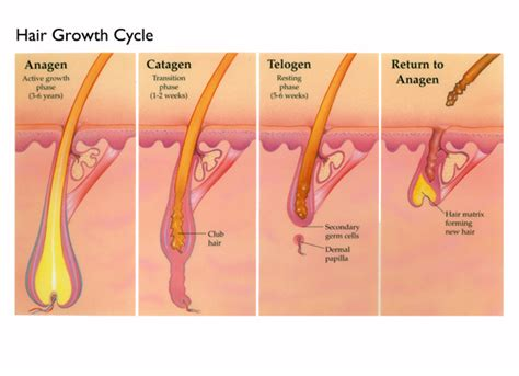 remove genital hair increase penis size picture 4