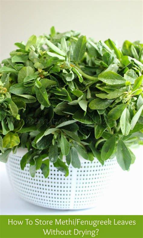fenugreek fresh leaves in copenhagen shops picture 2