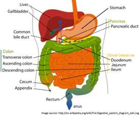 gastrointestinal tract picture 6