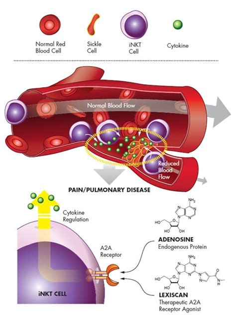 cytokines blood flow and ice picture 9