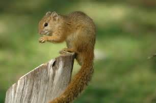 picture of squirrel h picture 3