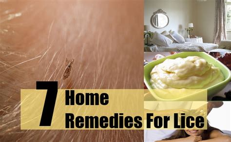 herbal treatments for lice picture 10