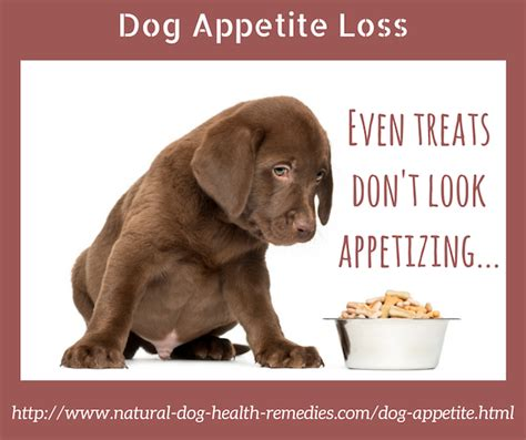 dog loss of appetite picture 6