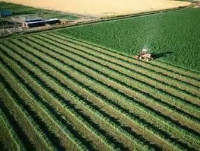 colorado alfalfa growers picture 17