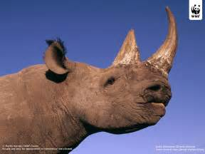 rhino 5 pill how long us it efective picture 12