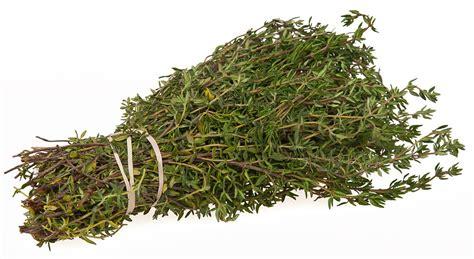 herbal sleep remedies picture 11