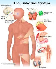 parathyroid nervous system disorder picture 3