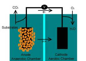 microbial fuel cell picture 6