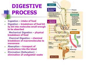 process of digestion picture 1