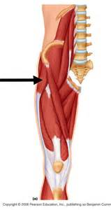 cure for muscle fasciae picture 1