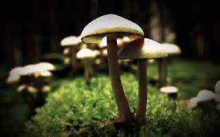 fungi mushrooms picture 18