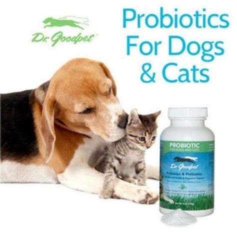 probiotics for dogs picture 1