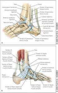 differential diagnosis pain fifth metatarsal fifth toe joint picture 9