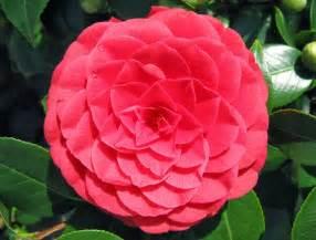 microdermx camellia oil picture 11