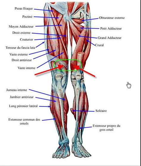 diagnosis of muscle pain in legs picture 4