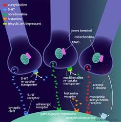 prozac male libido picture 14