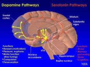 Dopamine serotonin mountain states health picture 1