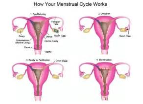 what happens if women take an ovary feminizing picture 7