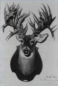 world's largest deer antlers picture 3