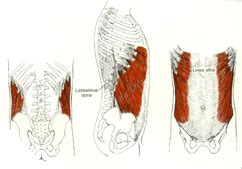 internal muscle injury picture 21