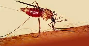 malaria in punta cana 2014 picture 5