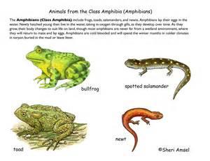 amphibain diet picture 7