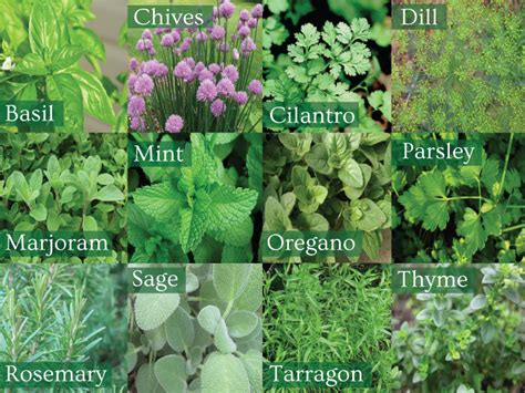 herbal supplies picture 11