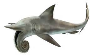 prehistoric sharks h picture 9
