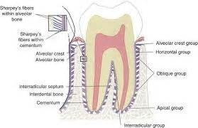 bone loss in teeth picture 5