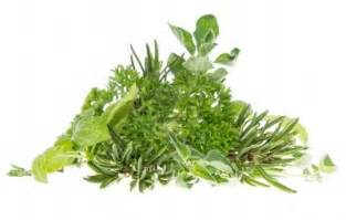 best hot herbal herbs picture 1