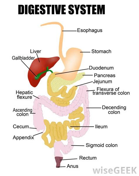 yellow diarrhea causes intestinal system picture 6