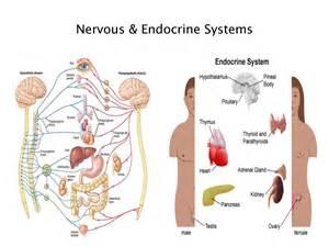 growth hormone dysregulation quizlet picture 17
