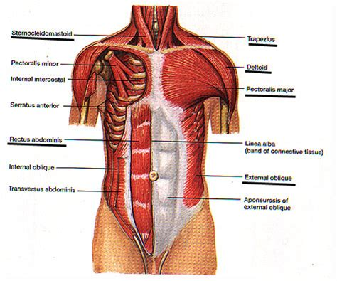 muscle sorness in the chest picture 1