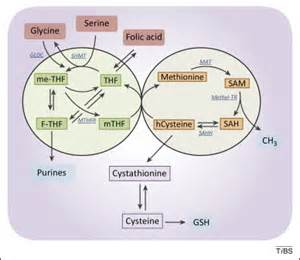 yeast metabolism picture 1