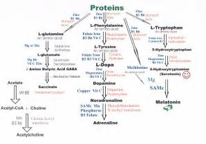 amino acids for increaed blood flow picture 12