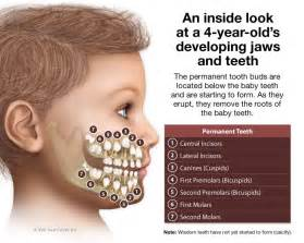 children teeth baby permanent when to pull picture 1