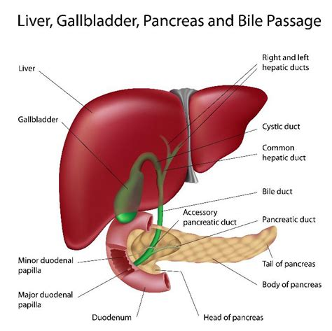 fluid collection gall bladder cancer surgery picture 14