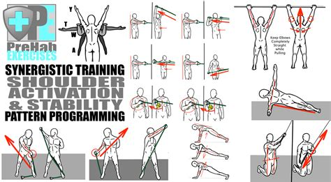 exercises for every muscle picture 11