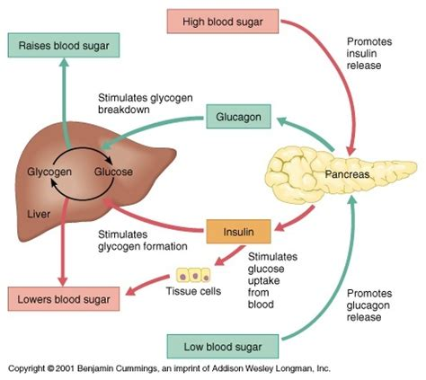 controlling glucose levels with liver disease picture 4