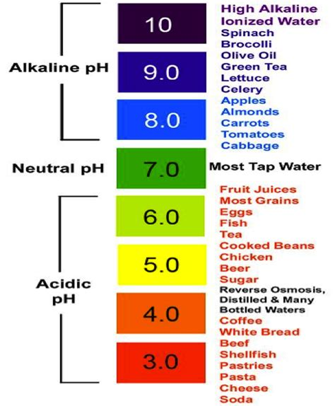 food and the acid-alkali balance of the body picture 10