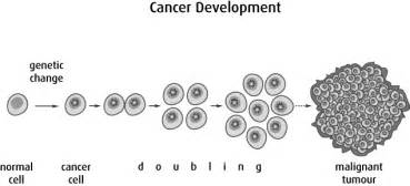 how fast does cancer grow picture 3