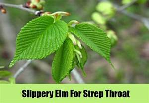 slippery elm herbal remedy picture 5