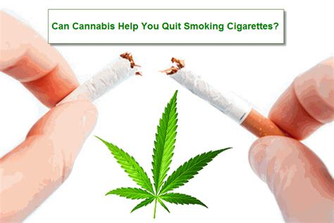 cigarette smoking quit chat picture 13