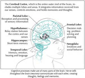 low testosterone cognitive function picture 10
