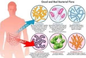 intestinal bacteria picture 3