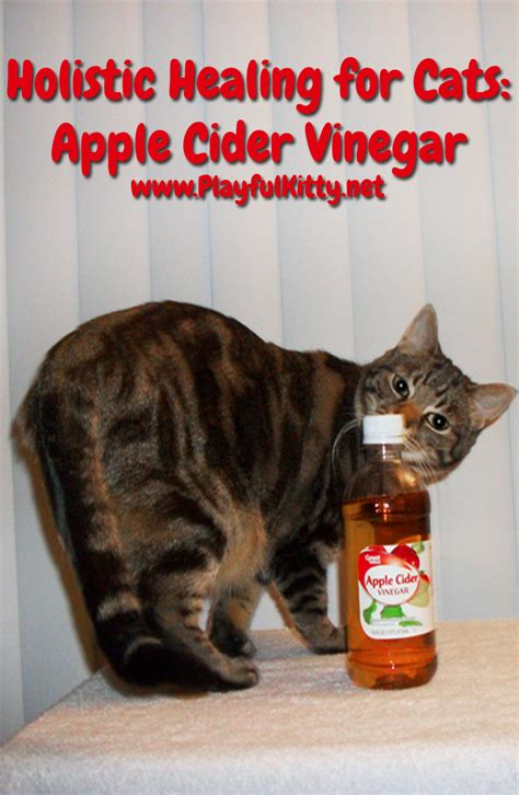 apple cider vinegar for cys is in cats picture 11