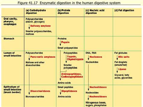 human liver diagram picture 11