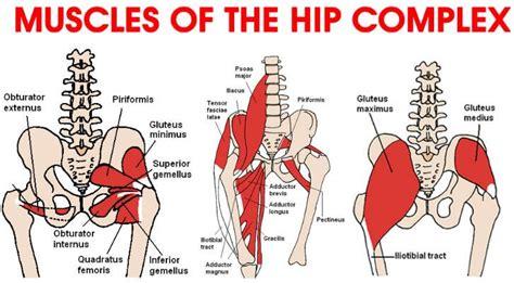 hip flexor injury symptoms picture 5